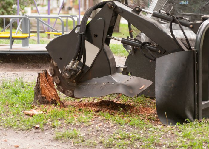 stump removal tree service for southbury home